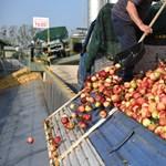 Megtalálták a megoldást a magyar almatermelők: pálinkát főznek abból, amit nem vettek be a feldolgozók