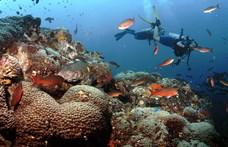 Szörnyen hangzik: 100-ból 17 állat meghal a vizekben a klímaváltozás miatt