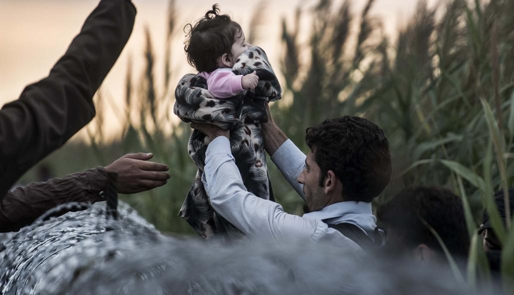 20150831002 - faz.15.08.26. - Röszke: Röszkei menekültes cikkhez (alkonyattól pirkadatig) - menekült, bevándorló, migráns, bevándorlás, Röszke, határlépés, határ