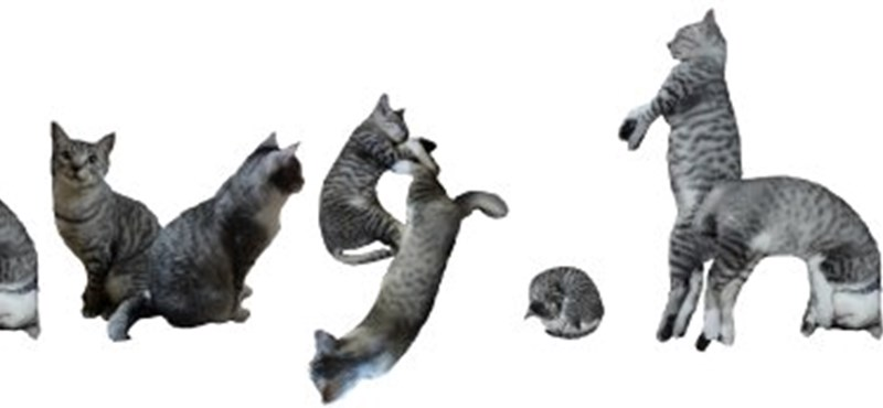 Írjon macskabetűkkel