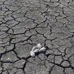 Levélben kérik Orbántól, hogy vegye végre komolyan a klímaváltozást