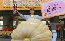 Megvan Japán legnagyobb töke: több mint 400 kilós