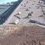 Meglepő, micsoda élet zajlik egy autópálya feletti vadátjárón – videó