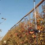 Intelligens gyümölcsszüretelő robotot mutatott be egy izraeli cég