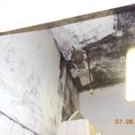 Egérürülék, penész, szenny – budapesti pékséget záratott be a Nébih