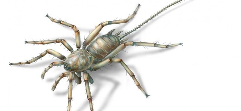 Ha undorodik a pókoktól, a most megtalált, 100 millió éves őspók nagyon nem lesz a kedvence – fotók