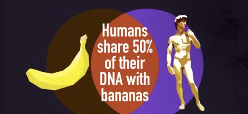 Tizenegy tudományos tény, amit senki nem tud