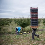Rossz hír a gazdáknak: kevesebb pénzt kapnak Brüsszelből 2020 után