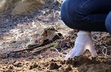Hajdúsámsoni kutyatetemek: a gyepmester állítja, tucatnyi állatot temetett el ott