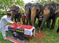 Petárdával töltött gyümölcs ölt meg egy elefántot Indiában
