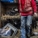 Ingyen ivartalanítják az Illatos útról örökbe fogadott kutyákat