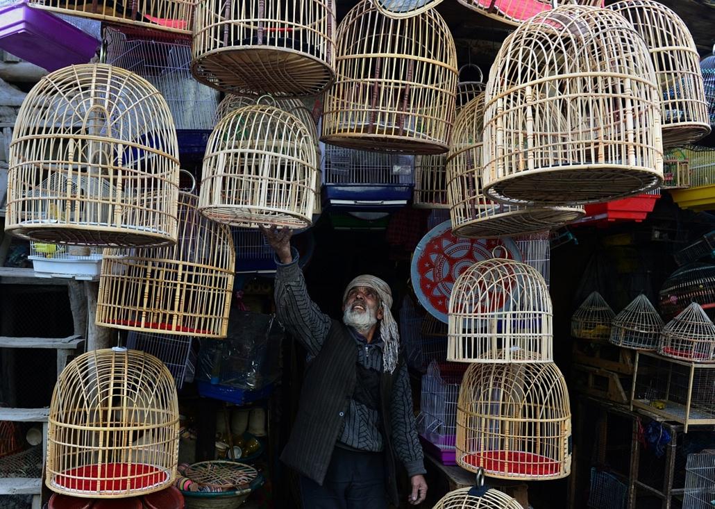afp.14.02.25. - Kabul, Afganisztán: a madárpiac egyik árusának kalitkái - a hét képei