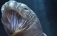Sokkoló képeket készítettek az állatvédők, hogy megmutassák, milyen nagy a baj a tengerekben