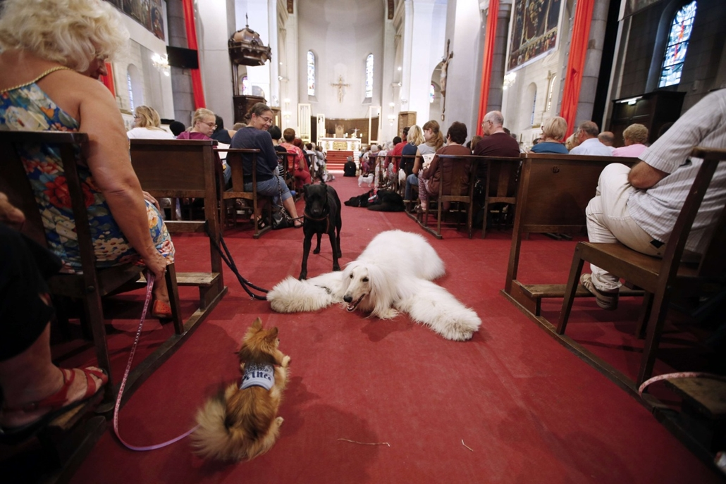 afp. a hét képei - állatok templomban 2014.10.05. People attend a mass dedicated to animals on October 5, 2014 in the Saint-Pierre-d'Arene church in Nice, southeastern France.