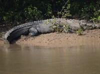 Sárba írt üzenettel menekültek meg a krokodilok torkából