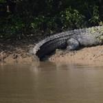Krokodil ölt meg egy halászt Szumátrán