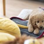 A felmelegedés miatt vígan szaporodnak a kullancsok és egyre több kutyát fertőznek meg