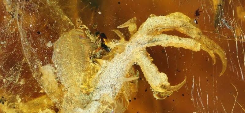 99 millió éves madárfióka-fosszíliát találtak egy burmai borostyánkőben
