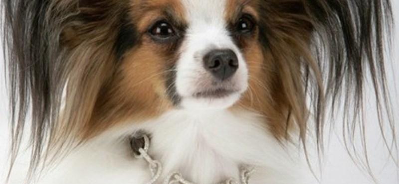 Ez a világ legdrágább kutyanyakörve