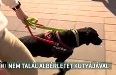 Vakvezető kutyája miatt nem akarnak lakást kiadni a látássérült fiúnak