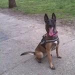 Eltűnt egy kutya, amit gazdája mellől, az 1-es villamosról rúgtak le