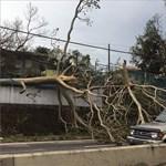Sajnos csak a hurrikánok tudták felkorbácsolni az autóeladásokat