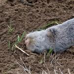 Feljelentették a földikutyákat azbeszthulladékkal mérgezőket