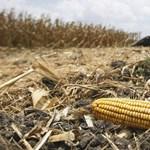 Vádemelés a kukoricába fulladt kisfiú ügyében