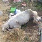 """""""Rohantunk a szénával, hogy legyen mit enni az elvileg megmentett lovaknak"""""""