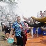 Fotó: arcon spriccelte a turistákat az elefánt