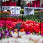 Holnaptól május közepéig csodálhatjuk Európa virágoskertjének színorgiáját – videó