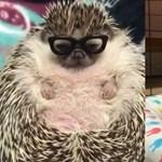 Már a plus size állatoknak is van Instagram-oldala