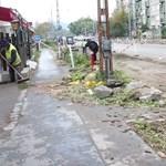 Puccsszerűen letarolták a fákat a XIII. kerületben