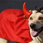 Kutyakarnevál Rióban