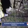 Nem először ölte meg újszülött gyermekét a Fejér megyei nő