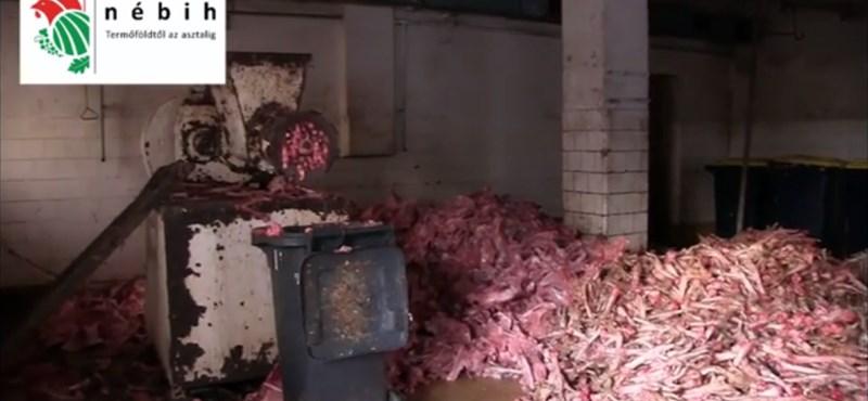 Horrorisztikus filmet forgatott a Nébih egy állati hulladékokat ledaráló üzemben