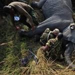 30 év börtönre ítéltek egy hírhedt kongói orvvadászt