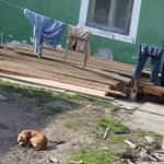 Drámai adat érkezett a magyar gyerekszegénységről