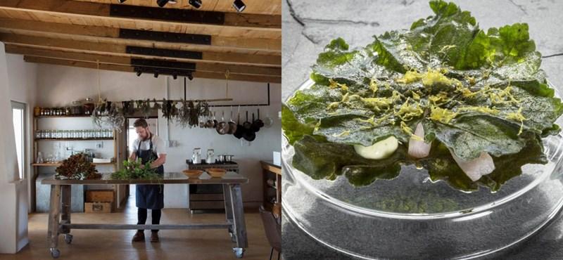 Algák és hínár a világ legjobb éttermében