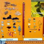 A tengeri teknősök több mint fele eszik műanyagot, amelyből akár egyetlen darab is halálos lehet