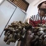 Megszabadítják a bangladesi faembert a kezére nőtt kéregtől