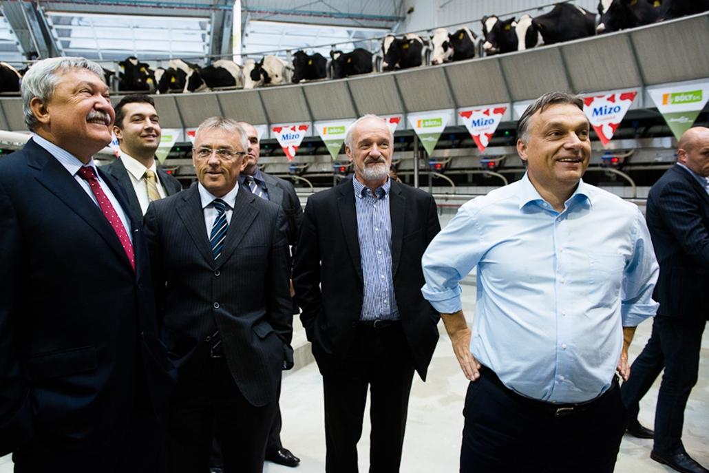 Orbán Viktor megtekinti Csányi Sándor tehenészetét, Bonafarm, Mizo, tehén, mezőgazdaság