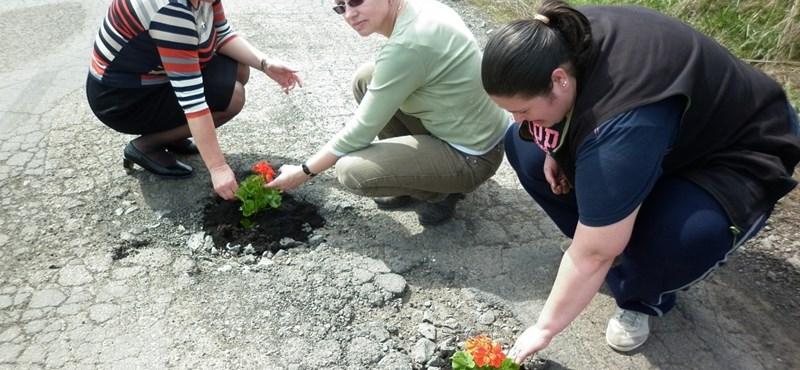 Képek: sok száz kátyú 8 kilométeren – virággal ültették be őket