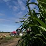 Rekordszinten az élelmiszerárak az egész világon