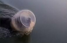 Műanyag bödönbe szorult fejű mackót mentett meg egy család  – videó