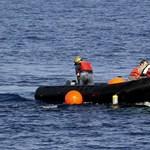 Nagyon ritka, pár hónapos bálnaborjút gázolt halálra egy hajó Florida partjainál