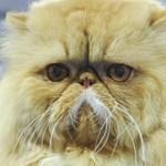 Báli ruhába öltöztetett macskáját vitte a szalagavatóra
