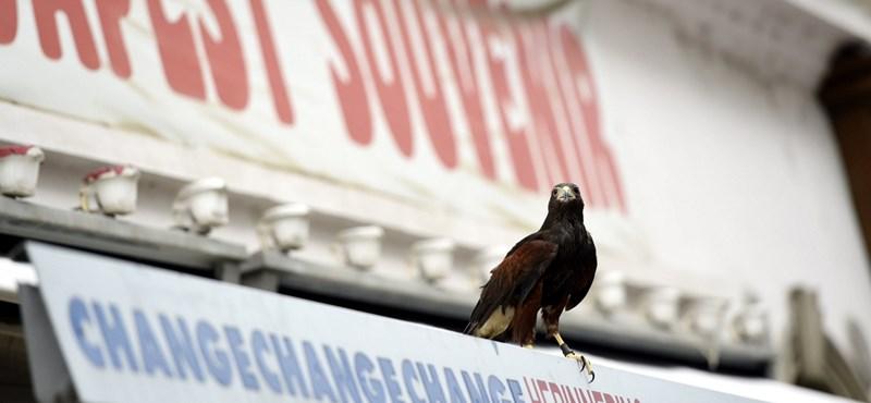 Több madárfaj is kihalt az elmúlt években