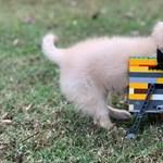 Legóból épített kerekes kocsit kapott egy rokkant kutya
