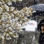 Ahol hosszabb lesz a téli szünet: rendkívüli szünetet rendeltek el a brit iskolákban